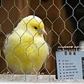 合興附幼鳳凰谷鳥園 (39)