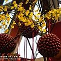 彰化溪州公園花在彰化 (18)