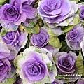 彰化溪州公園花在彰化 (45)