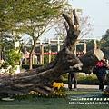 彰化溪州公園花在彰化 (69)