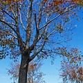 楓樹里楓樹 (10)