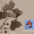 楓樹里楓樹 (9)