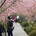 鳳凰茶園賞花 (19)