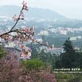 鳳凰茶園賞花 (23)