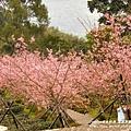 鳳凰茶園賞花 (25)