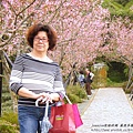 鳳凰茶園賞花 (36)