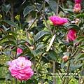 鳳凰茶園賞花 (75)