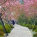 鳳凰茶園賞花 (8)