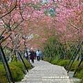鳳凰茶園賞花 (9)