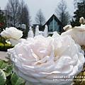 全得玫瑰莊園 (111)