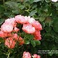 全得玫瑰莊園 (14)