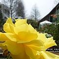 全得玫瑰莊園 (17)
