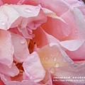 全得玫瑰莊園 (3)
