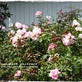 全得玫瑰莊園 (35)