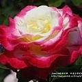 全得玫瑰莊園 (42)