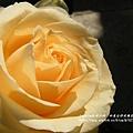 全得玫瑰莊園 (49)