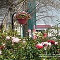 全得玫瑰莊園 (86)