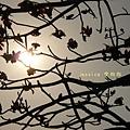 木棉花拍拍 (112)