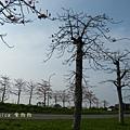 木棉花拍拍 (116)
