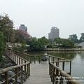 豐樂公園洋紅風鈴木 (12)