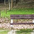 豐樂公園洋紅風鈴木 (24)