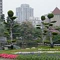 豐樂公園洋紅風鈴木 (3)
