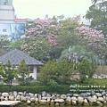 豐樂公園洋紅風鈴木 (29)