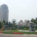 豐樂公園洋紅風鈴木 (43)