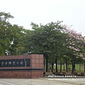 豐樂公園洋紅風鈴木 (48)