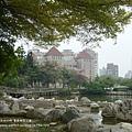 豐樂公園洋紅風鈴木 (8)