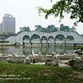 豐樂公園洋紅風鈴木 (9)