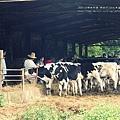 大甲省農會農場(88)
