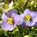 紫芳草田尾隨拍 (88)