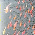 湖糖廠放風箏 (121)