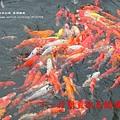 溪湖糖廠放風箏 (123)
