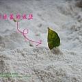 溪湖糖廠放風箏 (89)