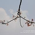 溪州綠筍路鳳凰花開 (145)