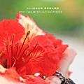 溪州綠筍路鳳凰花開 (155)