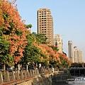 台中秋紅谷生態公園 (3)