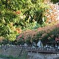台中秋紅谷生態公園 (7)