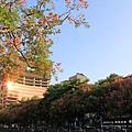 台中秋紅谷生態公園 (14)