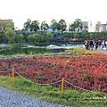 台中秋紅谷生態公園 (93)