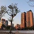 台中秋紅谷生態公園 (130)