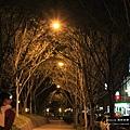 台中秋紅谷生態公園 (194)