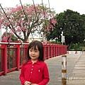 北斗河濱公園美人樹 (3)