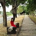 北斗河濱公園美人樹 (72)