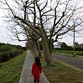 北斗河濱公園美人樹 (25)