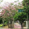 北斗河濱公園美人樹 (79)