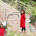 北斗河濱公園美人樹 (82)