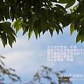合興國小運動會 (91)